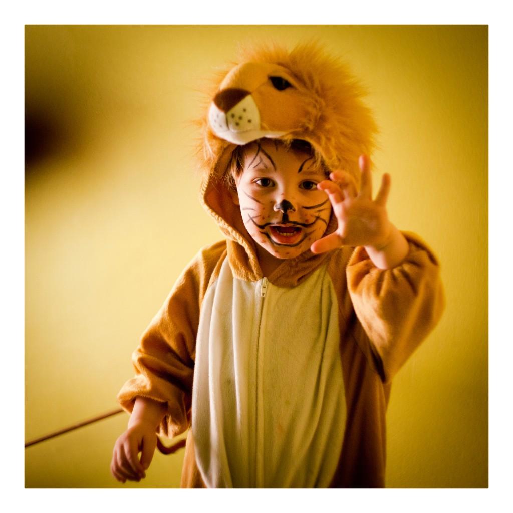 111 calli löwe